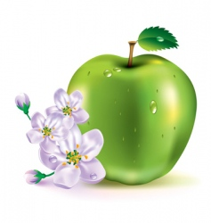 Apple the fruit and flowers vector