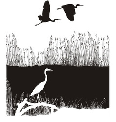Herons on the river vector