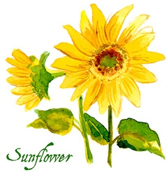 The composition of yellow sunflower painted in vector