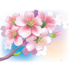 Flowers of sakura vector