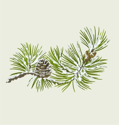 Branch of christmas tree with snow pine branch vector