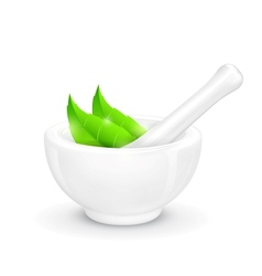 Mortar and pestle with herb vector