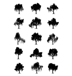 Weeping willows vector