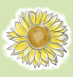 Flower sunflower painted imitating watercolor vector
