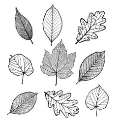 Set of leaves vector