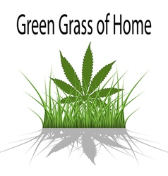 Green grass of home vector