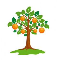 Orange tree vector