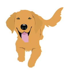 Little golden retriever vector