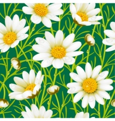 Chamomile seamless background vector