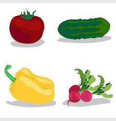 Tomato cucumber pepper radish vector