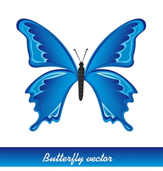 Butterlfy background vector