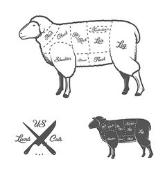 American cuts of lamb or mutton diagram vector