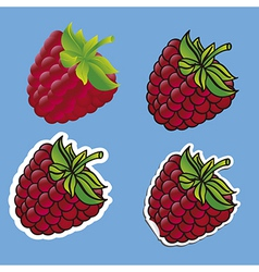 Different types of blackberries isolated on blue b vector
