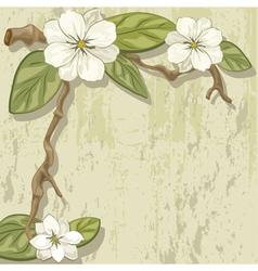 White magnolia vector