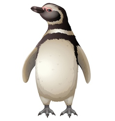 Magellanic penguin vector