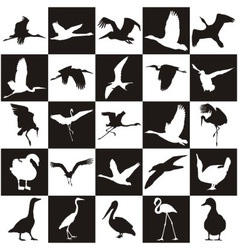 Black and white background with aquatic birds vector