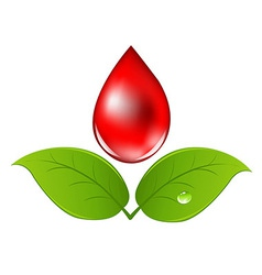 Blood drop with leafs vector