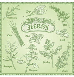 Outline herbs set vector