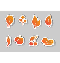 Leaves and fruit icons vector