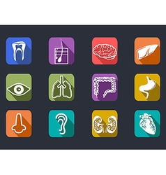 Human internal organs long shadow icons set vector
