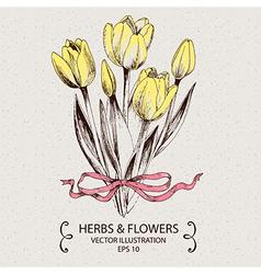 Yellow tulips vector