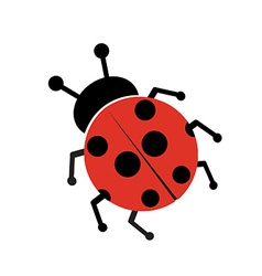 Ladybug isolated on white vector