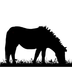 Pony grazing vector