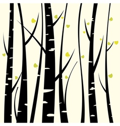 Birch three vector