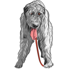 Dog breed irish wolfhound vector