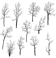 Set of different winter trees vector