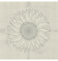 Sunflower grunge vector