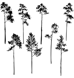 Set of pine trees vector