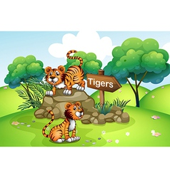 Tigers near the wooden arrow vector