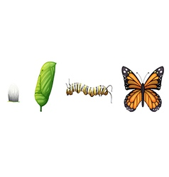 Life cycle of a monarch butterfly vector