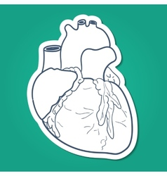 Anatomical heart human organ vector