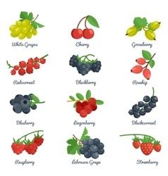 Berries flat icons set vector