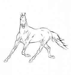 Horse arab vector