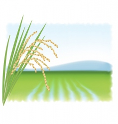 Rice field vector