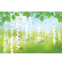Spring birches forest vector