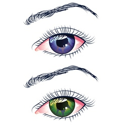 Violet and green eyes vector
