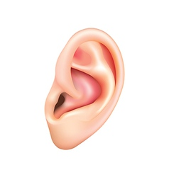 Human ear isolated vector