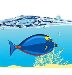 Blue coral fish vector