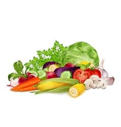 Fresh vegetables on white vector