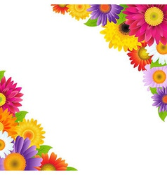 Colorful gerbers flowers border vector