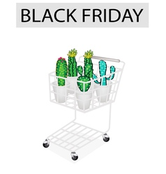Cactus and cactus flowers in black friday shopping vector