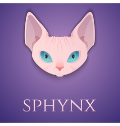 Sphynx cat face vector