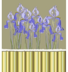 Decorative pattern invitation with iris flowers vector