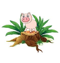 A pig above a trunk vector