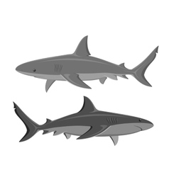Sharks set of two large sharks isolated on white vector