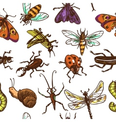 Insects sketch seamless pattern color vector